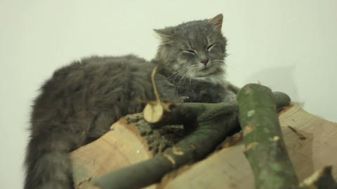 Cat on Wood Footage