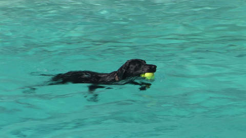 Swimming Dog Stock Video Footage