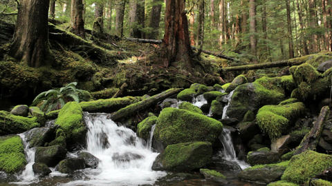 Olympic National Park River Stock Video Footage