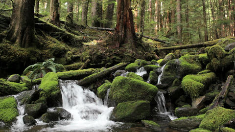 Olympic National Park River Footage
