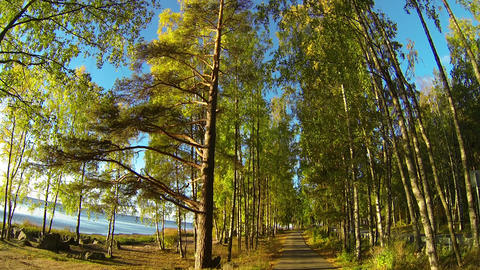 Autumn forest on the coast of the Gulf Stock Video Footage