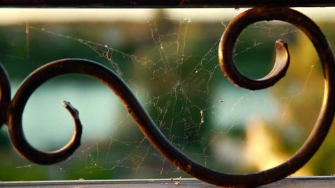 Cobweb on metal lattice Stock Video Footage