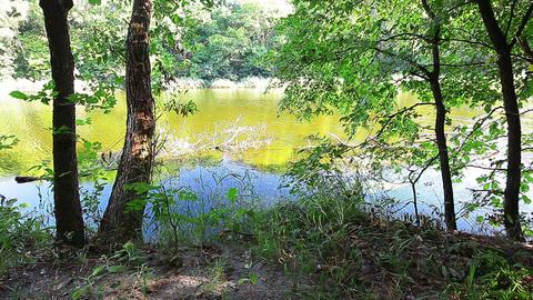 river landscape Stock Video Footage