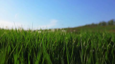 a walk in dandelions Stock Video Footage