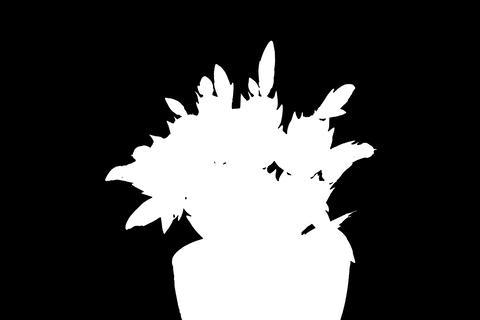 4K. Epiphytic cactus. Red schlumbergera flower bud Stock Video Footage
