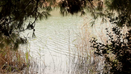 Relaxing pond water reflections frame Stock Video Footage