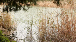 Relaxing pond water reflections wind Stock Video Footage