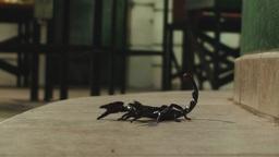 Scorpion turning Stock Video Footage