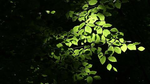 Glowing Leaves Stock Video Footage