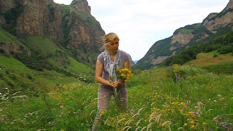 A woman collects medicinal St. John's in the meado Stock Video Footage