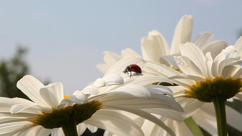 ladybird Footage
