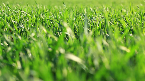 Fresh green grass Stock Video Footage