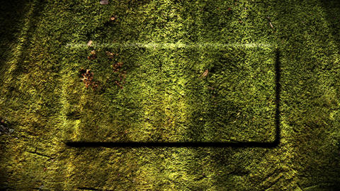 Mossy Background Stock Video Footage