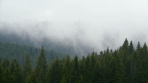 Smoke Behind The Trees stock footage