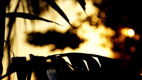 Sunset - Warm Backlighting Stock Video Footage