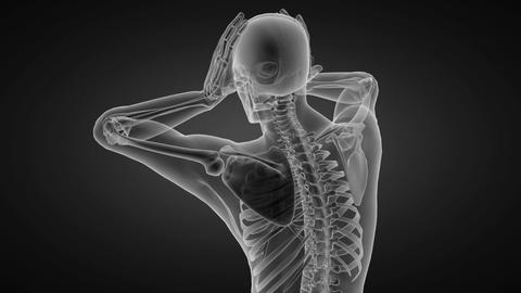 human radiography scan made in 3D Stock Video Footage