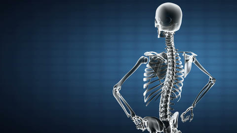 Loop Rotate Skeleton stock footage