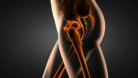 loop hip radiography scan Stock Video Footage