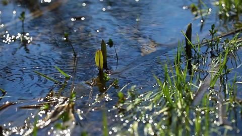 spring brooks Stock Video Footage