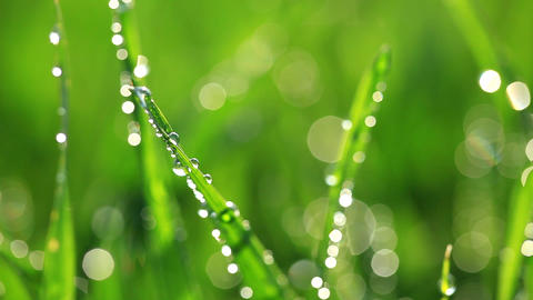 Fresh green grass with dew drops Footage