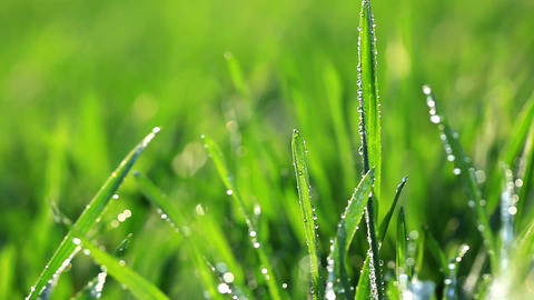 Fresh green grass with dew drops Stock Video Footage