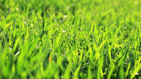 green grass - macro Stock Video Footage
