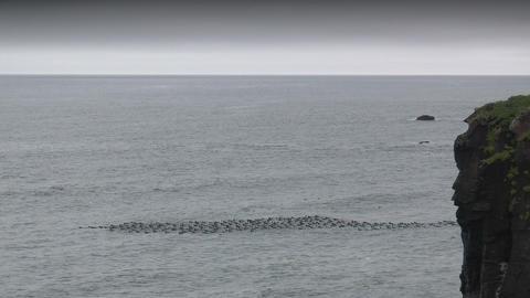 seabirds riding on ocean waves wide shot taken in Stock Video Footage