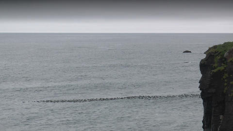 seabirds riding on ocean waves wide shot taken in  Footage