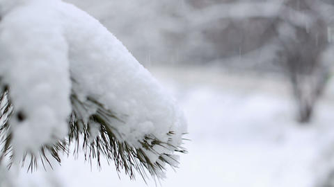 Snow Blizzard Stock Video Footage