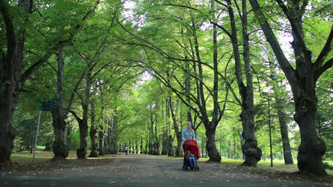 Woman Taking Her Child For A Walk In Woodland stock footage