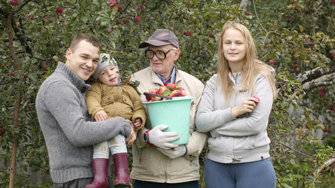 Family out collecting apples in the orchard Stock Video Footage