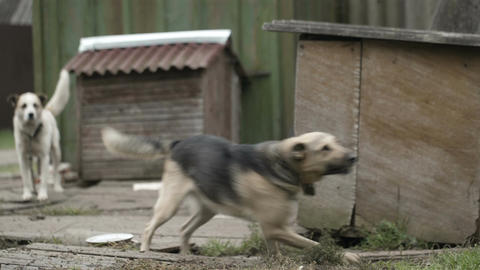 Dog on a chain catching food Stock Video Footage