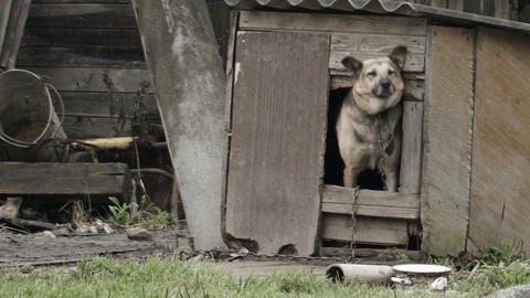 Dog peeking out of the dog house Stock Video Footage