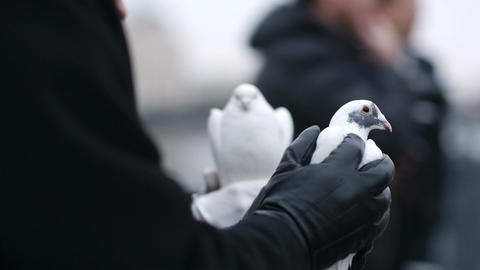 Woman holding a dove in her hands Stock Video Footage