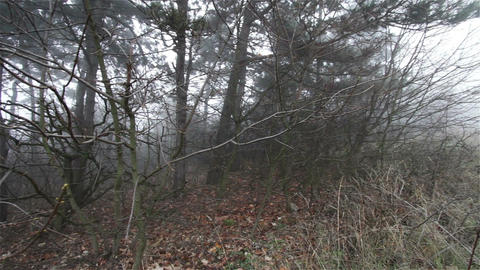 Scary Hill Foggy Forest 8 Stock Video Footage
