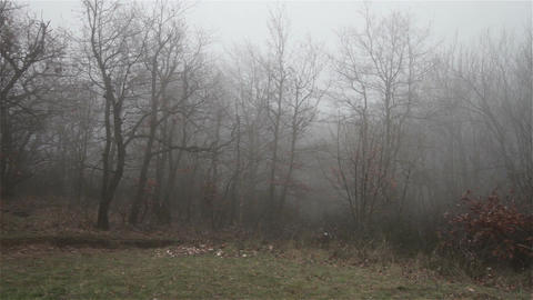 Scary Hill Foggy Forest 14 Stock Video Footage
