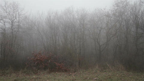 Scary Hill Foggy Forest 14 Footage