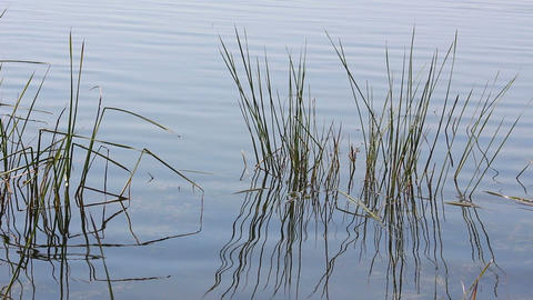 plants and water ripple on summer pond Stock Video Footage