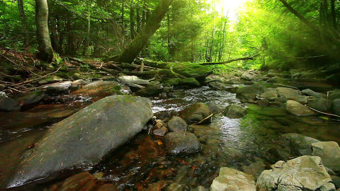mountain stream in the forest Stock Video Footage