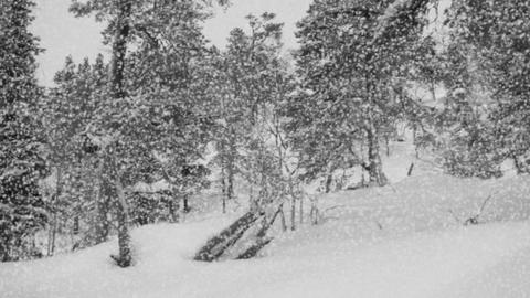 Snowfall in the forest Stock Video Footage