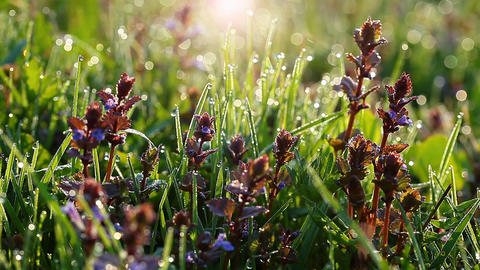green grass and drops of morning dew Stock Video Footage