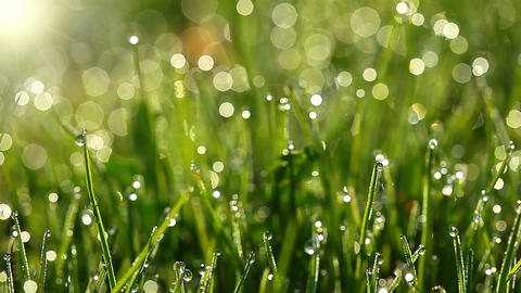 green grass and drops of morning dew Footage