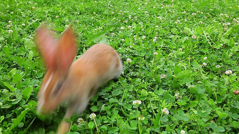 rabbit on a green lawn Stock Video Footage