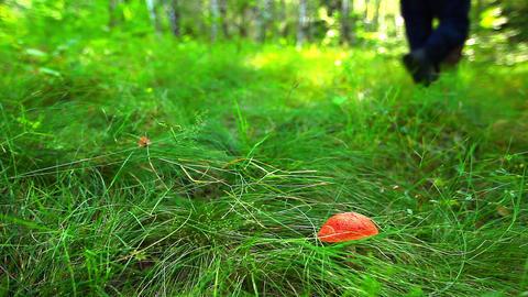 mushroom in green grass Stock Video Footage