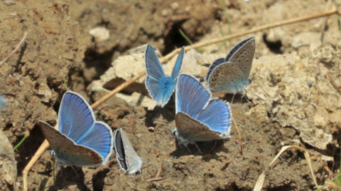 blue moths Stock Video Footage