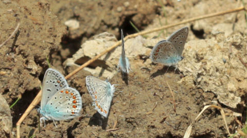 blue moths Stock Video Footage