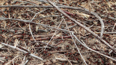 lots of ants hard working on building anthill of c Stock Video Footage