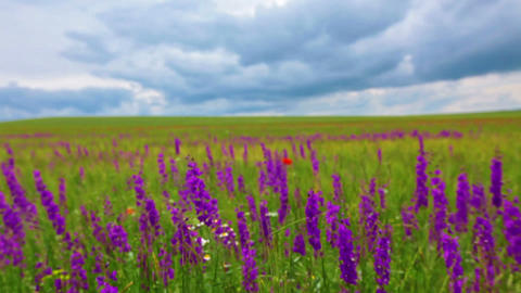Field Of Flowers And The Cloudy Sky stock footage