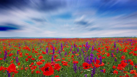 field of flowers and the cloudy sky Footage