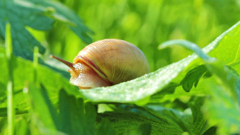 snail Footage